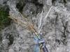 Grigna Corso Alp 06.06.15 001.JPG